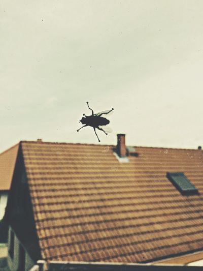 Mücke. 2014 Mücke Fly Window Windows