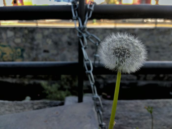Diente de león Dandelion Nature Photography Lovephotography  Vientos Streetphotography Garden Photography Check This Out World Hanging Out