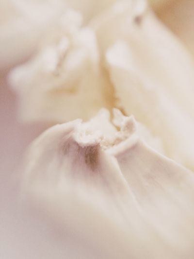 Gastronomy Onion Garlic Cloves Macro Close-up Kitchen Ingredients Ingredient White White Color Background Spice Cook  Cooking Food Ecru Fade Faded Detail Taste Tasty Selective Focus Depth Of Field Nature