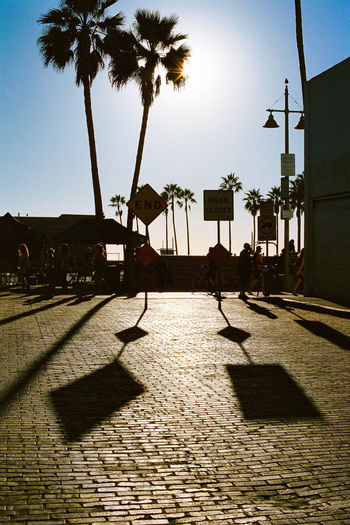 Analog Camera Analogue Analogue Photography Cali California California Dreamin California Sunshine EyeEmNewHere Film Ishootfilm Los Angeles, California Analog Day Filmisnotdead Landscape Outdoors Palm Trees Shadows Street Sun Vertical Stories From The City