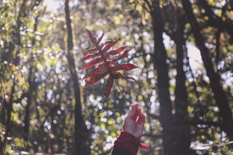 Cropped image of woman holding leaf against trees at forest