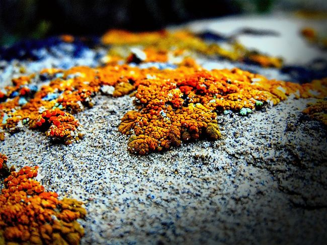 Beauty In Nature Close-up Day Focus On Foreground Lichen Multi Colored Natural Condition Nature No People Orange Color Outdoors Selective Focus Stone Surface Level Tranquility Wyoming