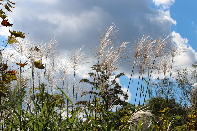 Plant Sky Cloud - Sky Growth Beauty In Nature Nature Day Low Angle View No People Land Tranquility Field Tree Scenics - Nature Outdoors Environment Tranquil Scene Landscape Non-urban Scene Sunlight