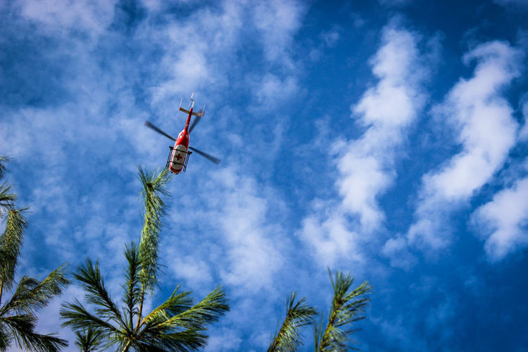 Air Vehicle Airplane Airshow Blue Cloud - Sky Day Flying Low Angle View Mid-air Nature No People Outdoors Sky Transportation Tree