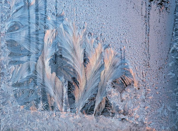 Eisblumen Am Fenster Cereal Plant Close-up Day Frosted Glass Frosty Kristalle Nature No People Outdoors Plant