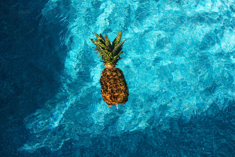 A pineapple fruit floating in the blue waters of an outdoor swimming pool on a sunny day