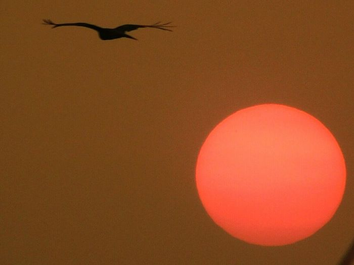 Sunset Flying No People Red Golden View Silhoutte Photography Silhouette_collection