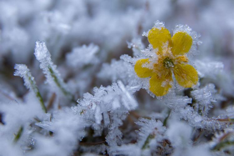 Close-up of frozen yellow flower