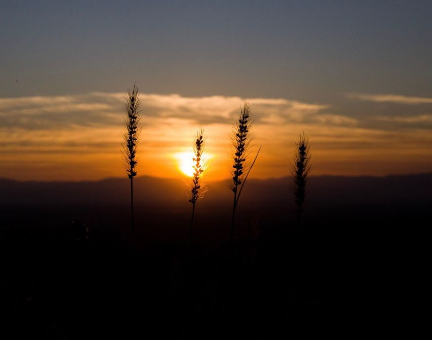 EyeEmNewHere Kaiserstuhl Earth Art Blackforest Photography Photooftheday Photo No People Landscape Sky Sunset Beauty In Nature Nature
