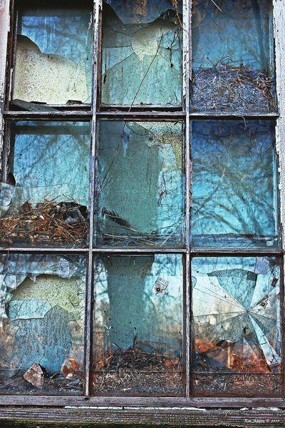 Vernon CT Window Bird Nests Broken Glass Window Panes