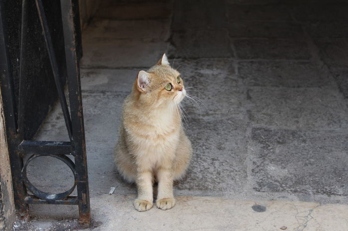 Beautiful cat in Venice Venezia Venice, Italy Cat Beautiful City Little Things Happy Life Perspective Looking Away Outdoors No People Peace Tranquility Beauty In Nature
