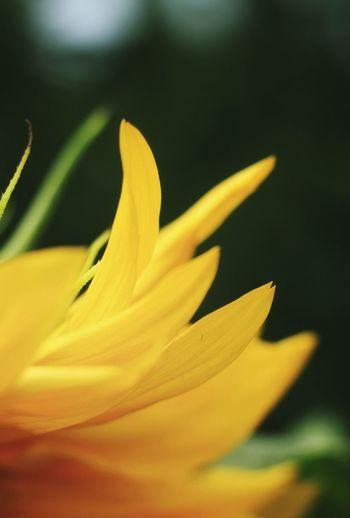 Born as summer flowers Summer Flower Flower 互粉