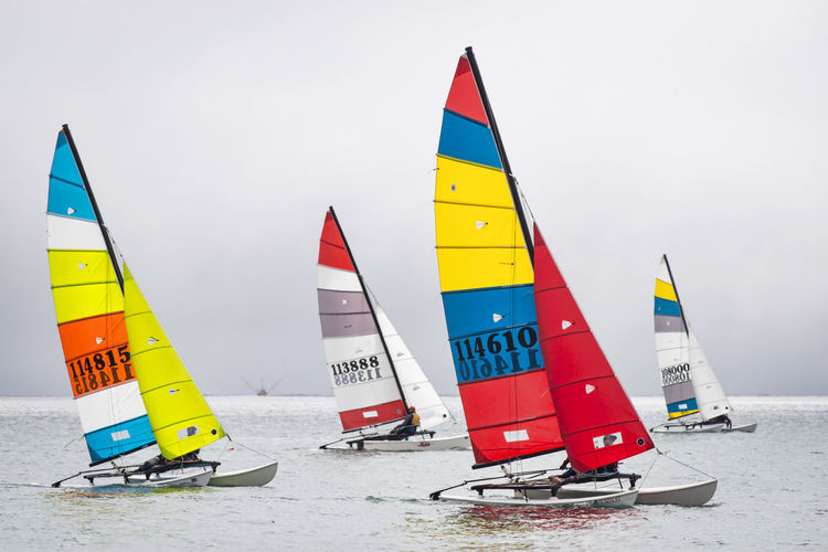 Multi Colored Day Transportation Nature Water Nautical Vessel Red Sailboat Sailing Catamaranboat Hobie Cat Hobby Sport Racing Bay Ocean Northern California Foggy Day Group Of Objects Red Color Yellow Color Blue