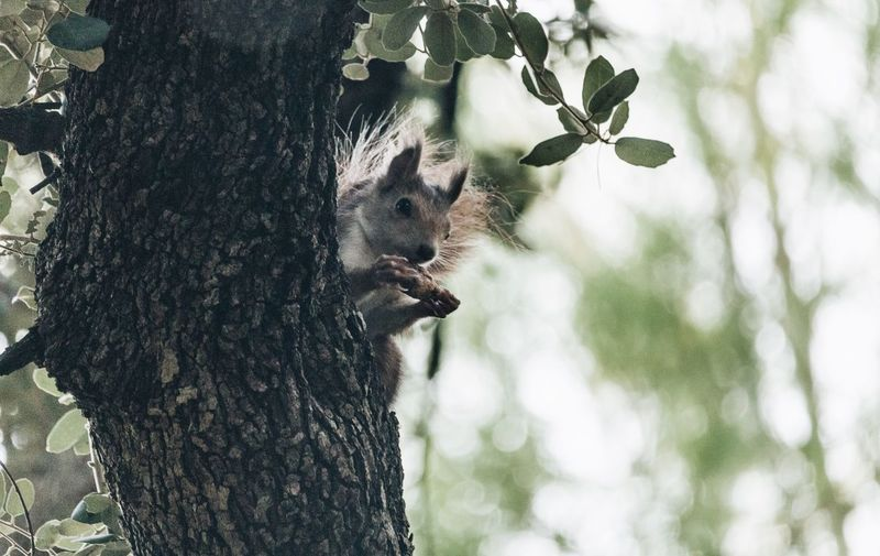 Squirrel Sauirrel Tree Plant Mammal Tree Trunk Trunk Animal Wildlife Animals In The Wild One Animal Nature No People Day Vertebrate Focus On Foreground Growth Outdoors
