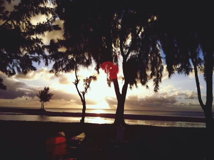 Trees EyeEm Nature Lover Landscape Sunset
