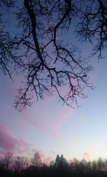 At a Feild. Hanging Out Taking Photos Blue Sky Tree Trees Outside Winter February Cold Pink Clouds Clouds Beautufulwiew