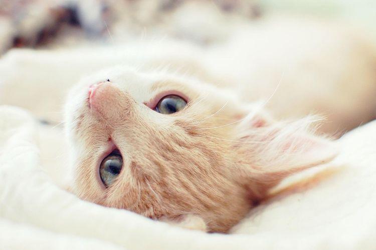 He should be a kitty model. Kitten Cat Pets Relaxing