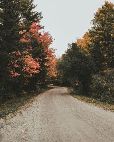 Early Fall in