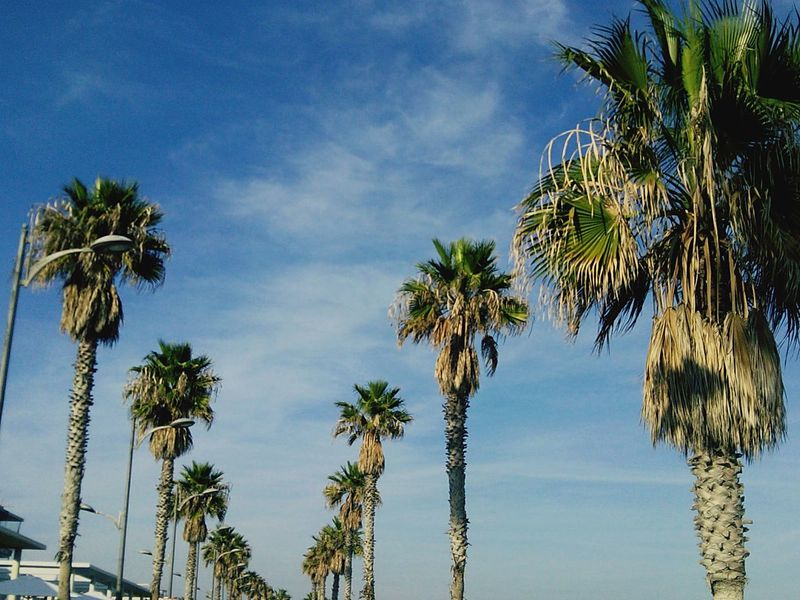 When someone asks you how is winter going...but you actually live in Spain. Wintertime Photography Travelphotography Perspective Picoftheday Palm Trees Natute_collection Beachphotography