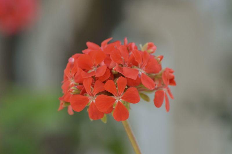 Flower çiçek Sardegna Sardunya PhotoByMuratGul