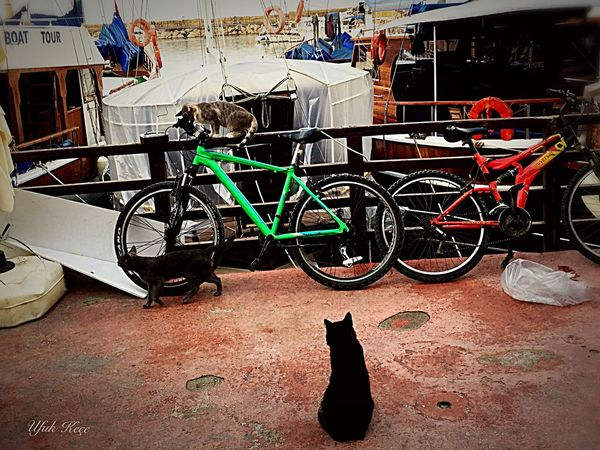 Bicycle And Cat NiceShot Open Edit Girne/ Kıbrıs Amazing Enjoyinglife  Architecture