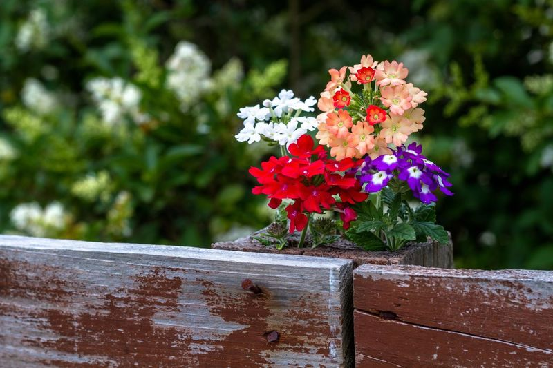 Flowering Plant Flower Plant Freshness Fragility Focus On Foreground Vulnerability  Beauty In Nature Nature Day Close-up Growth Flower Head Petal No People Outdoors Inflorescence Sunlight Wood - Material Green Color