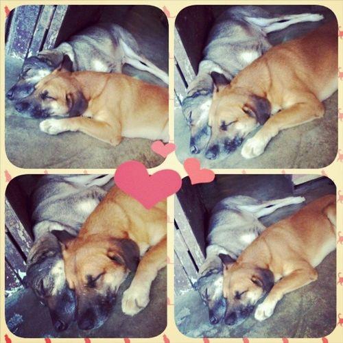 Mahal na mahal nila ang isa't isa. Si doki lagi nasiksik sa nanay melo nya :) MotherAndSonDogs Mommydog Doki Dogs DogLovers Sweet Love