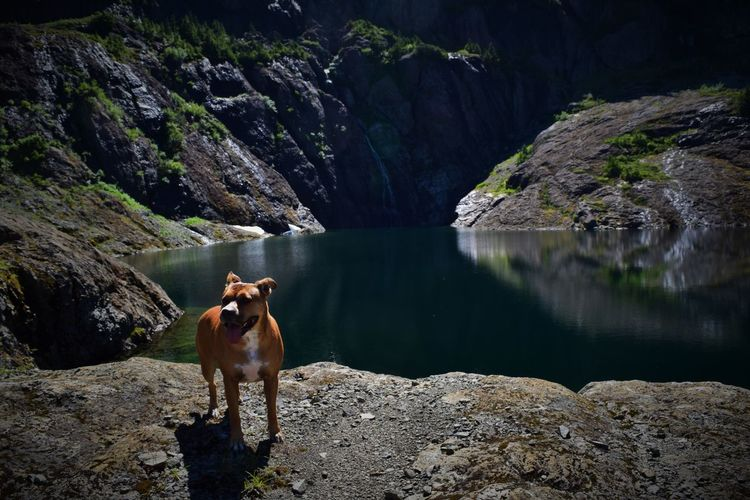 Dog standing by lake and rock formations during sunny day