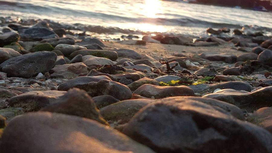 Sundown EyeEm Selects Pebble Beach Beach Sea Sunset Wave Pebble Water Close-up Algae Mussel