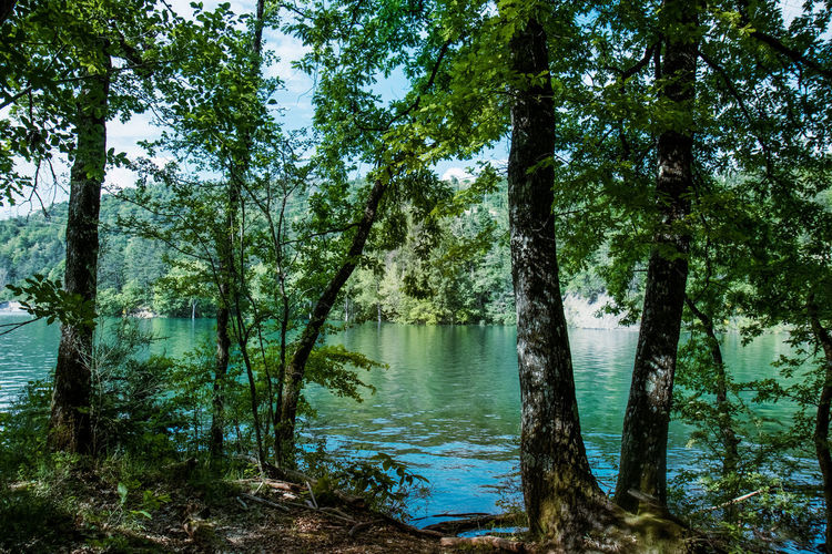 Trees by lake in forest