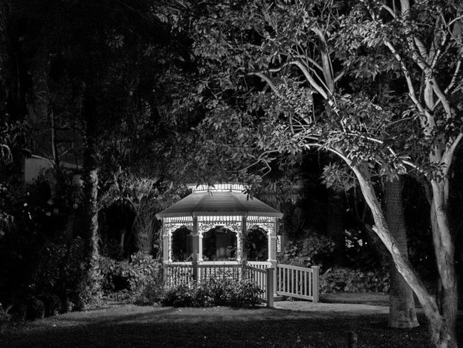 Gazebo Gazebo At The Park Night Lights Nightphotography Architecture Black And White Building Exterior Built Structure Gazebo And Nature Growth Nature Night No People Outdoors Tree