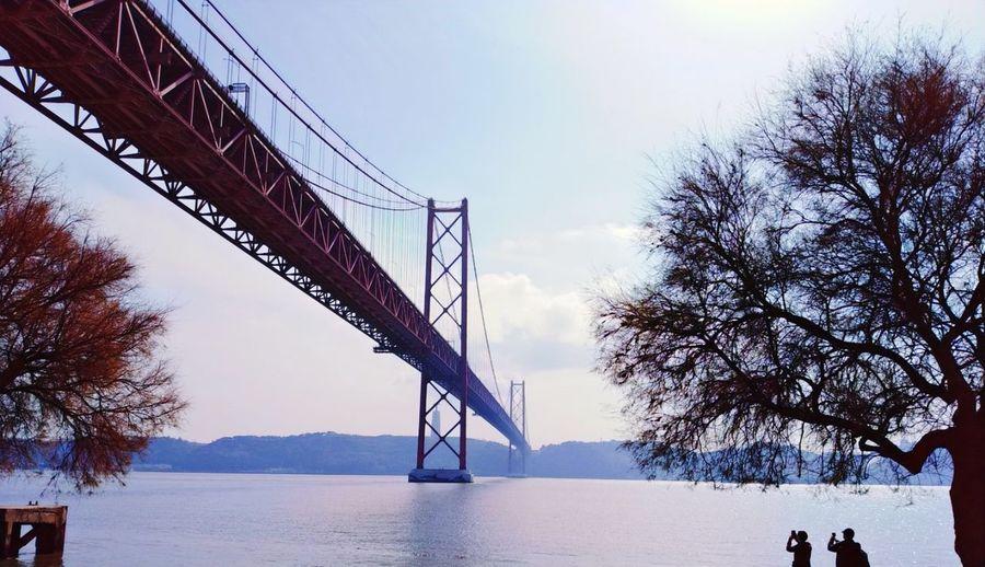 Tree Sky Bridge