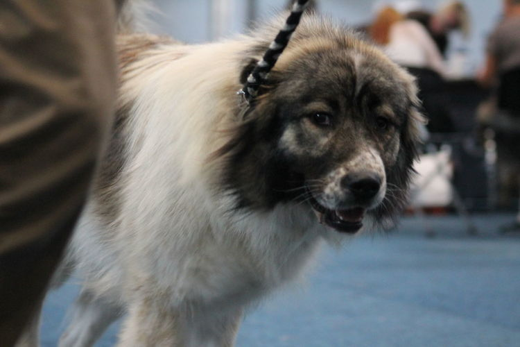 EyeEm Selects Pets Dog Portrait Close-up Animal Eye