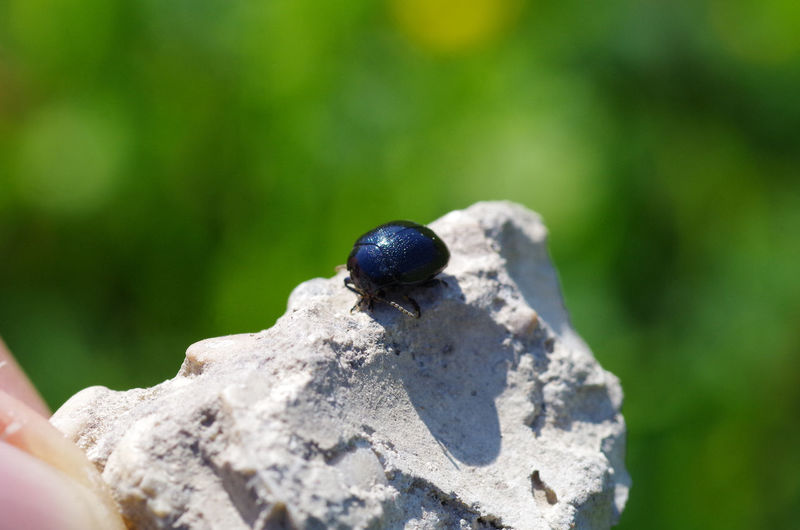 Close-up of black insect on rock