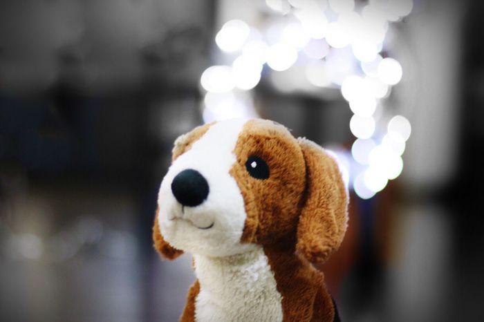 Check This Out Blackandwhite Dog Dogs Dreaming Doglover Dream Dreamy Cheese! Portraits Puppy Pup Puppies Puppy Love Toys Soft Soft Light Softtoys Bokeh Bokeh Photography Blurred Background
