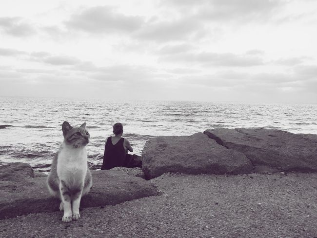 Woman, watching the sea with a friend Sea Memories Horizon Over Water Sky Beach Nature Sitting Water Outdoors Cloud - Sky Day Beauty In Nature Woman Cat Weekend Relax Alone Thinking Vacation Day Off Day Out Enjoying The View Solitude Air Clear Pet Portraits