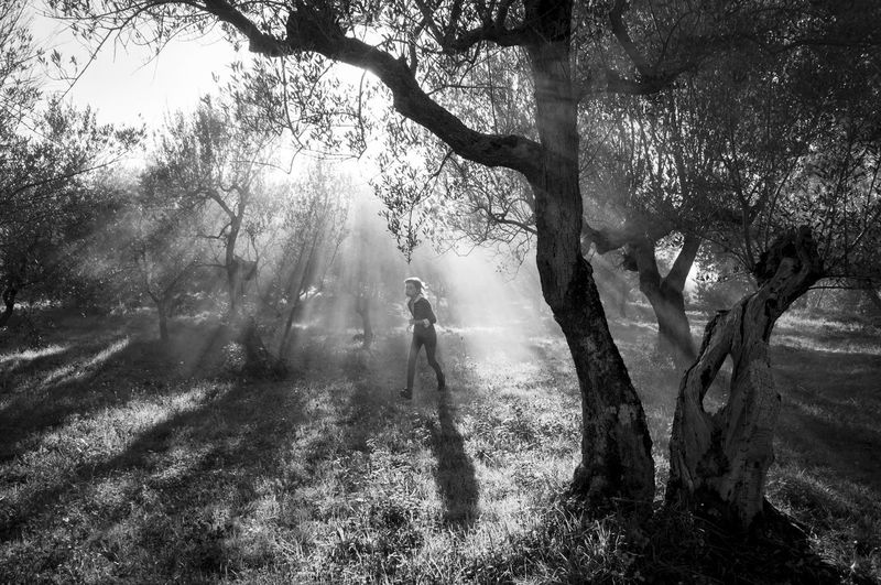 Dreamy Field Haze Light Light And Shadow Mist Olive Trees Olives One Person Outdoors Real People Running Silhouettes Sun Beams Sun Rays My Year My View