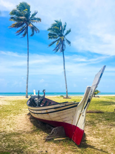 Palm and tropical beach. Beautiful nature landscape with Coconut Palm trees and traditional boat Beach Beauty In Nature Cloud - Sky Day Field Grass Growth Landscape Mode Of Transport Moored Nature Nautical Vessel No People Outdoors Palm Tree Sand Scenics Sea Sky Tranquil Scene Tranquility Transportation Tree Tree Trunk Water