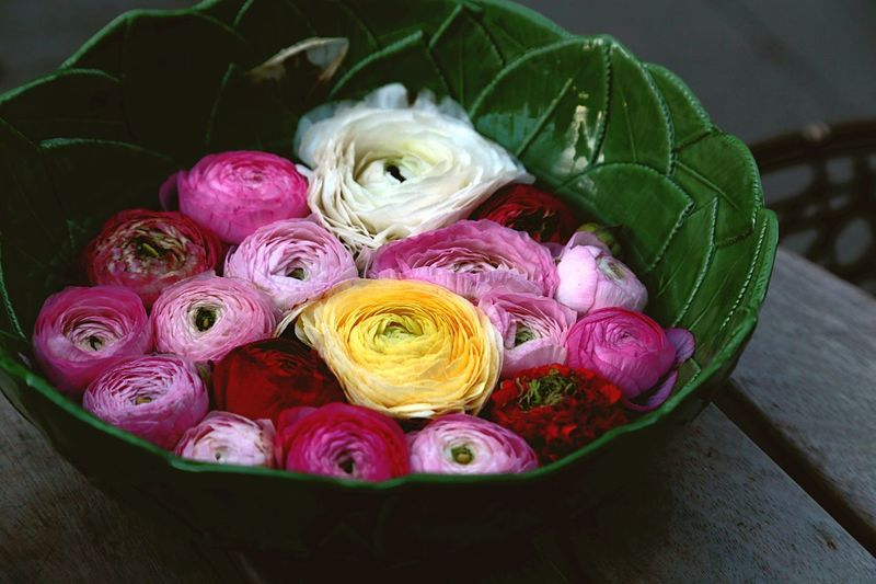 Close-up of fresh roses in bowl on table