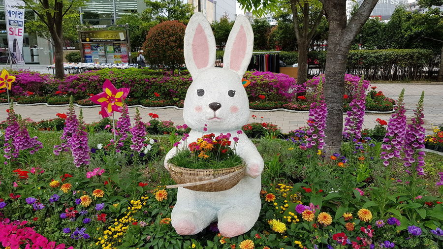 Rabbit Themapark Day Outdoors No People Tree Flower Nature
