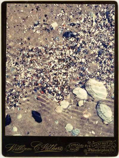 Lobach irishka Summer Underwater Water_collection EyeEm Nature Lover