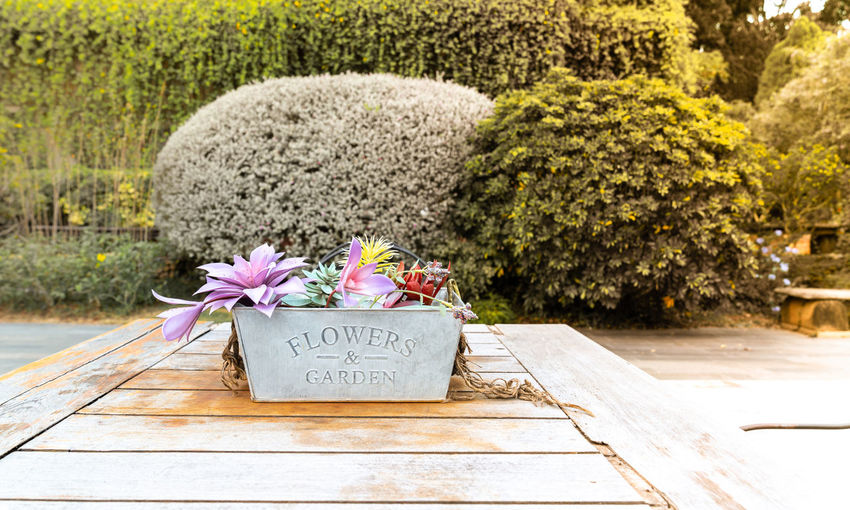 beautiful flowers in pot on wooden vintage table with tree background Flower Plant Flowering Plant Text Nature Communication Western Script No People Freshness Day Outdoors Wood - Material Beauty In Nature Emotion Close-up Footpath Growth Garden Cemetery Pink Color Flower Arrangement Flower Head Ornamental Garden Bouquet Purple