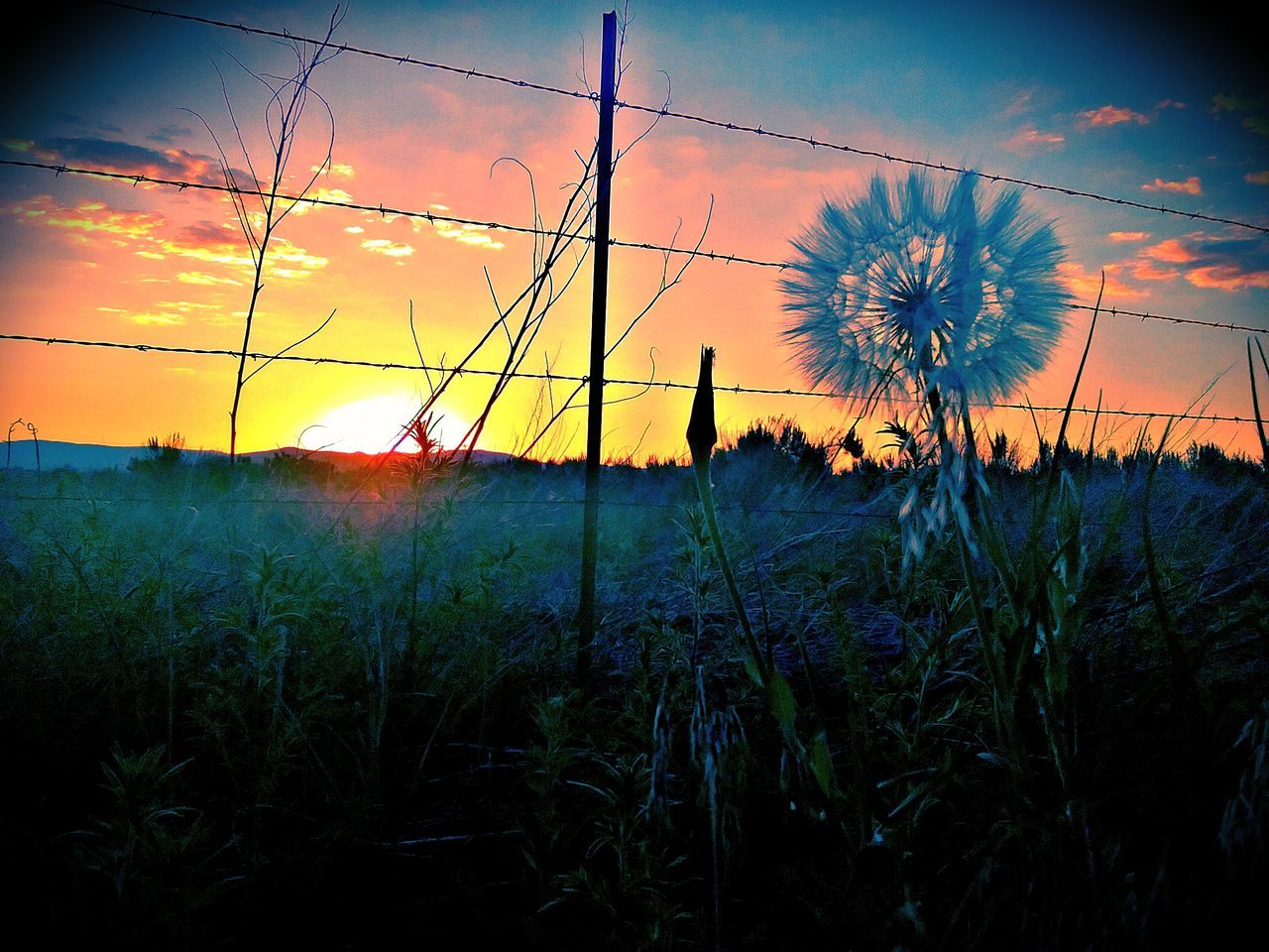 sunset, nature, beauty in nature, sky, growth, flower, field, sun, plant, scenics, tranquility, tranquil scene, no people, outdoors, cloud - sky, silhouette, landscape, grass, fragility, flower head