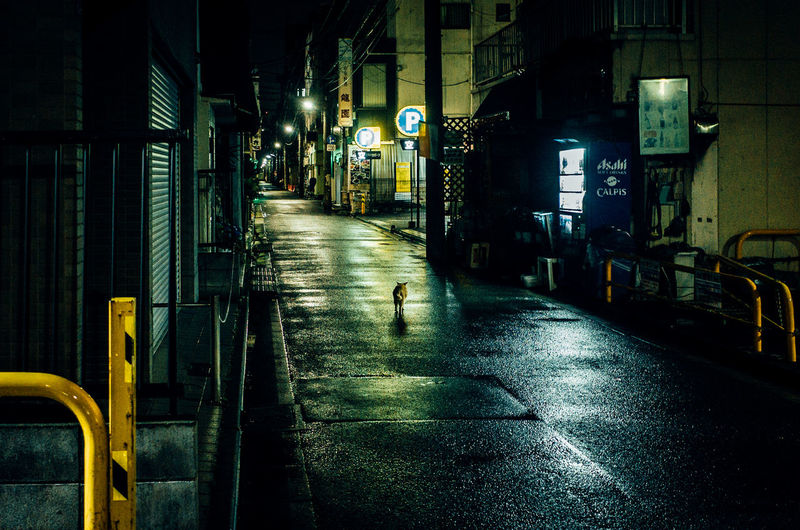 After The Rain Walk This Way Vanishing Point Tonight Is 100 Days Of Summer Fragility Outdoors Alley Alone Animals Atmosphere Cat Exceptional Normalcy Day Getting Inspired Light And Shadow Night Night Lights Night View Rainy Days Reflection Simple Moment Stray Cat EyeEm Selects Let's Go. Together. Breathing Space EyeEm Ready