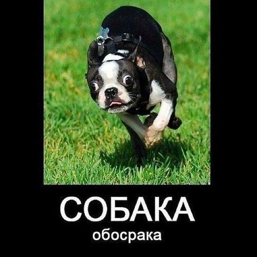 собака обосрака