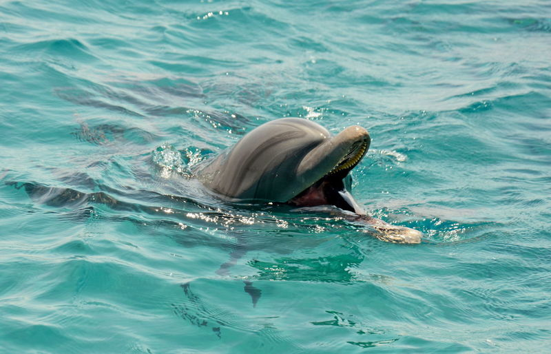 View of a dolphin in sea