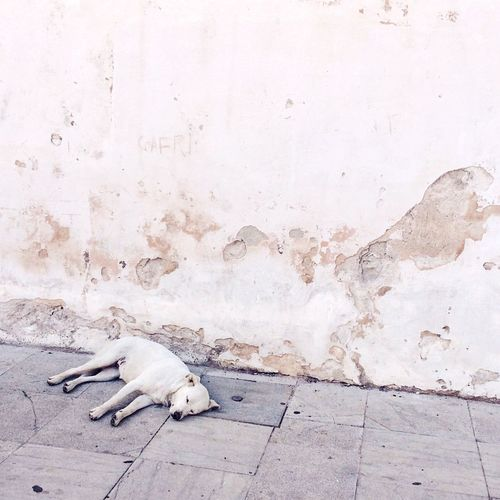 Dog Sleeping Against The Wall