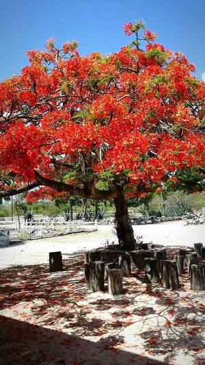 Check This Out Absolutely Incredible Throughmyeyes Treetastic Tree Life