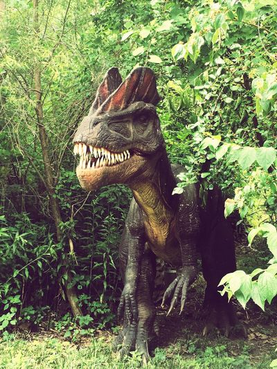 DINOSAUR ALIVE ..... All teeth 'Watch Out!' Dinosaur Dinosaur Alive Check This Out Can't Get Any Better!! Cedar Point Vacations Family Time ♥ Road Trip Photography This Is My Life❤ My Passion ❤
