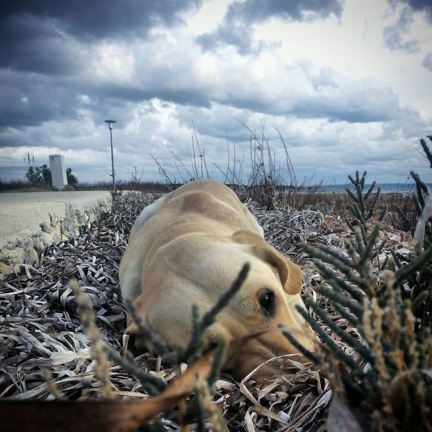 Mydog First Eyeem Photo